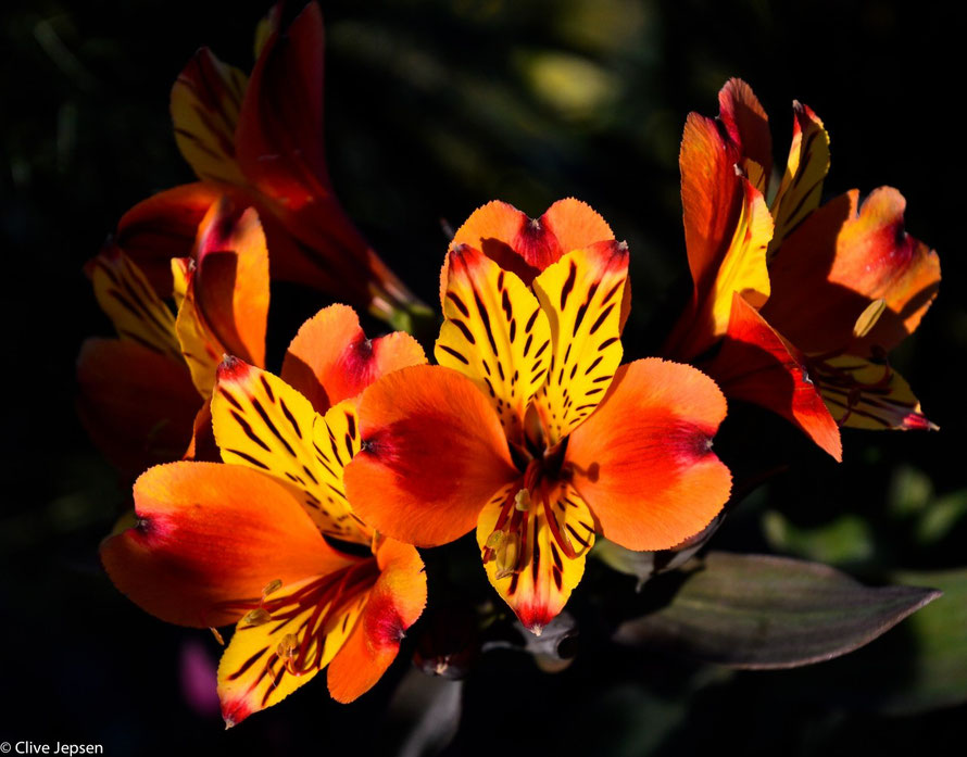 Blüte im Halbdunkel