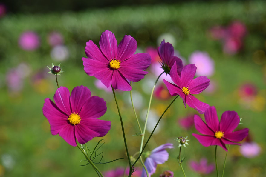 Ein wenig Sonne in Blumenform für den Betrachter