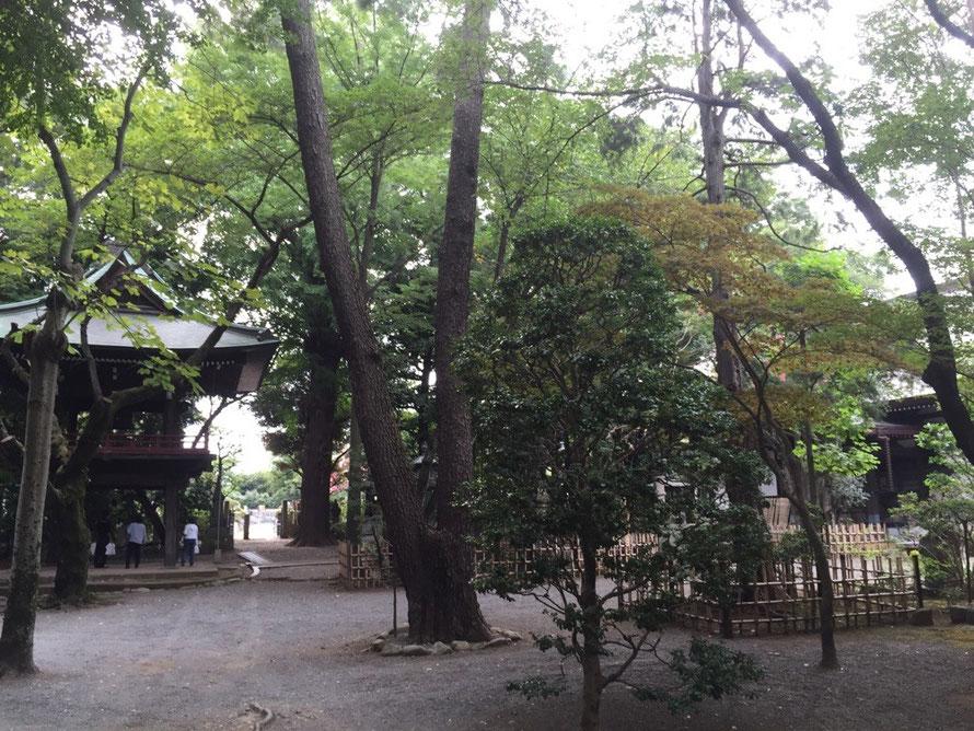 Senryuji Temple Tokyo Komae walking historical powerspot tourist spot TAMA Tourism Promotion - Visit Tama 泉龍寺 東京都狛江市 散策 パワースポット 歴史 観光スポット 多摩観光振興会