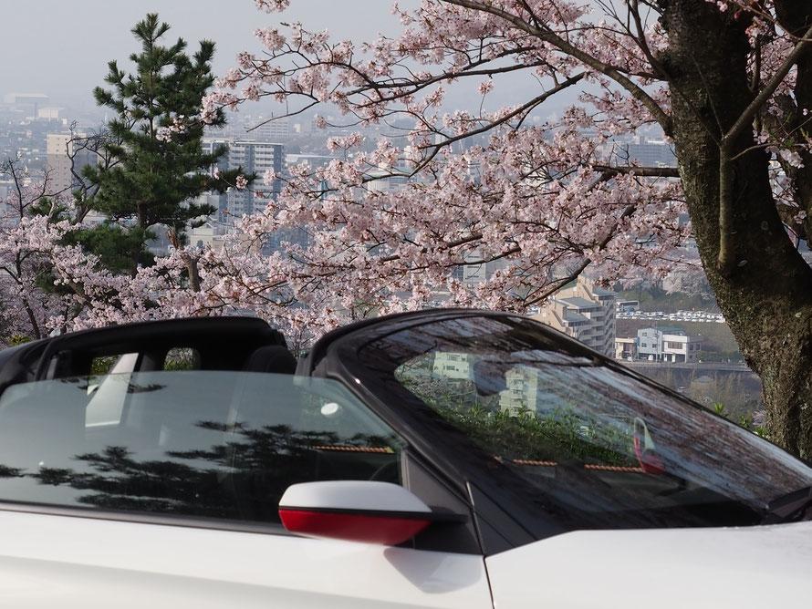 日立神峰公園桜ins660
