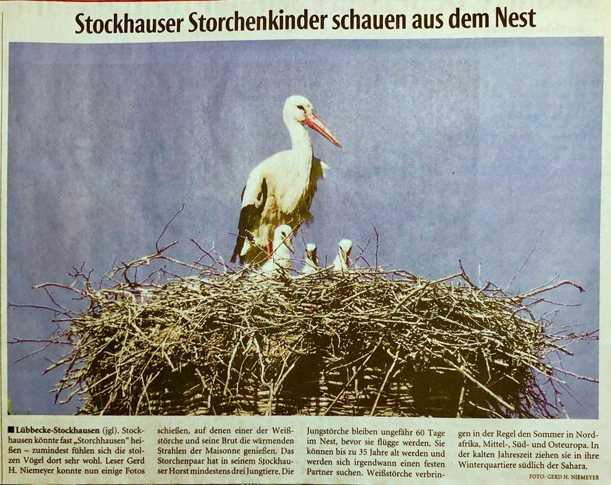 Weiterer aktueller Bericht über unseren Stockhauser Storchenhorst (Neue Westfälische, Lokalteil Lübbecke, 14.05.2019)