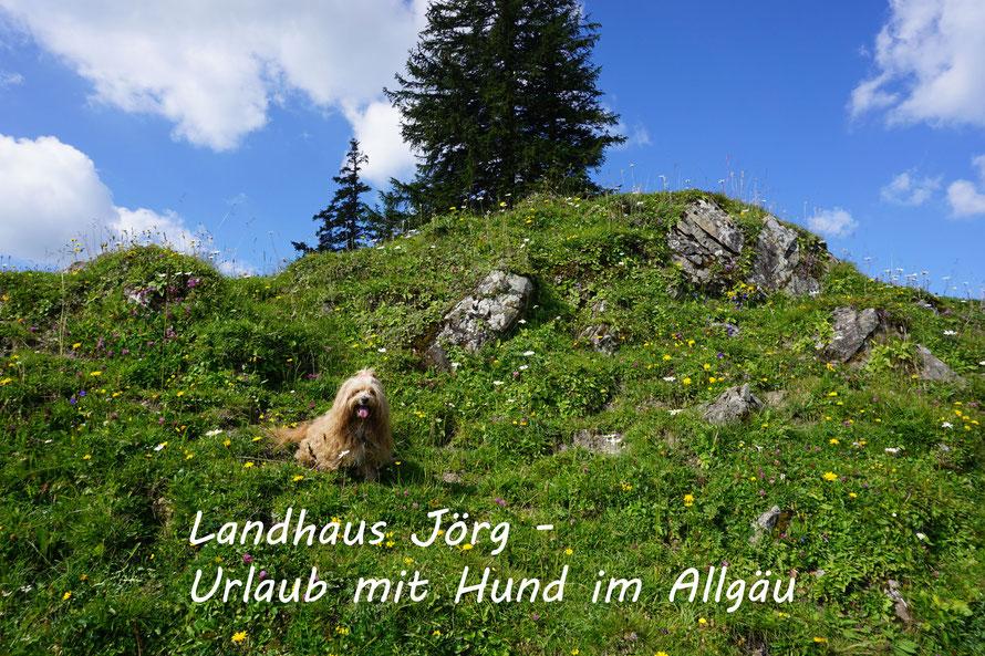 Hunde in Blumenwiese