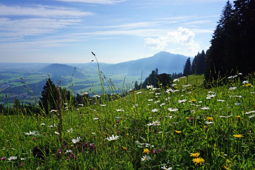 Blick vom Mittag auf Grünten und Rottachberg