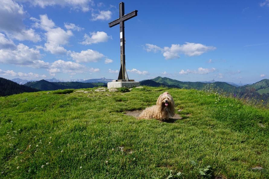 Hund vor Gipfelkreuz