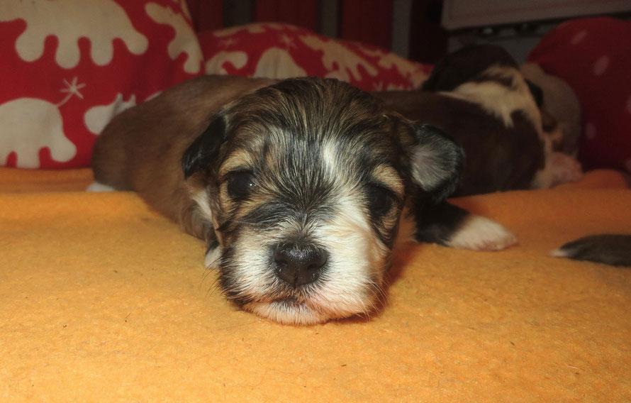 Tami, unser neuer Hofhund