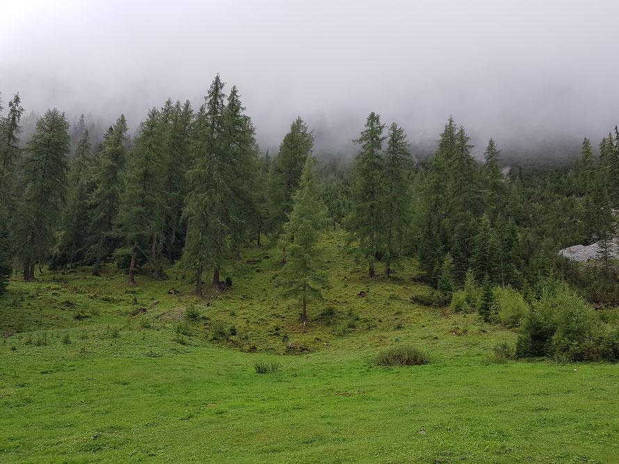 Der Märchenwald, ein mystischer Ort: herrliche Wiesen, wunderschöne Nadelbäume und dampfender Nebel