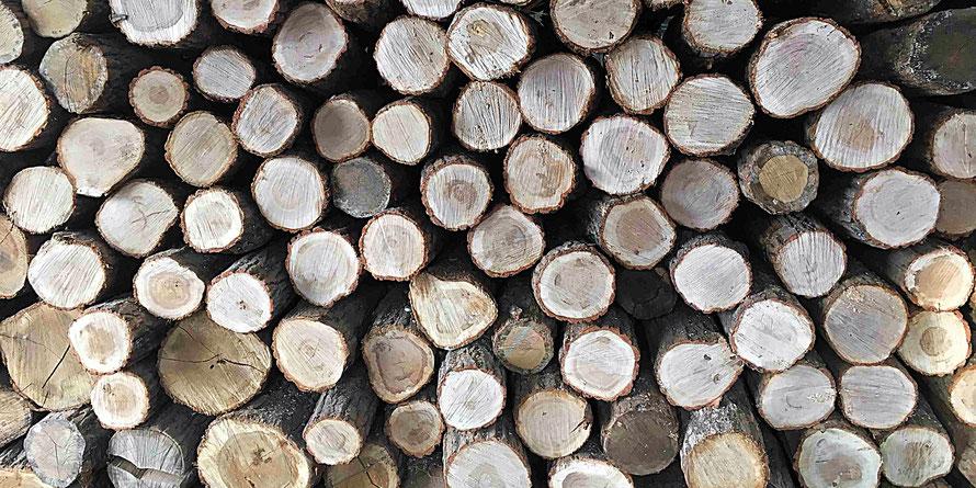 新潟 無垢フローリング アンドウッド 木材調達記