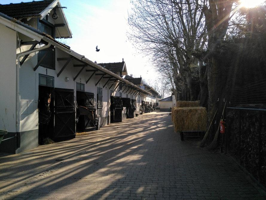 maisons-laffitte ecurie avenue egle