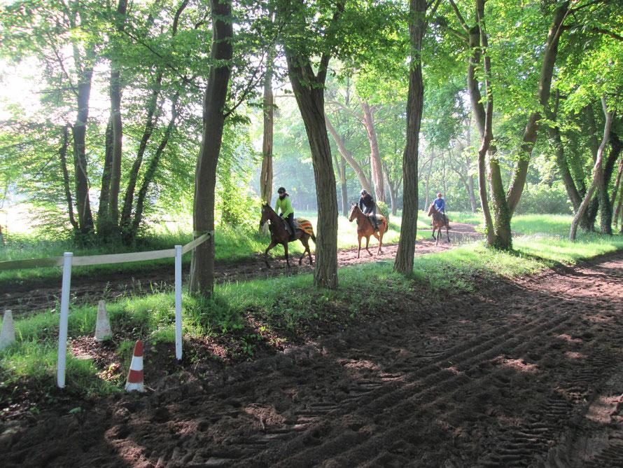 Entrainement de chevaux de course au centre d'entrainement de Maiosn-Laffitte