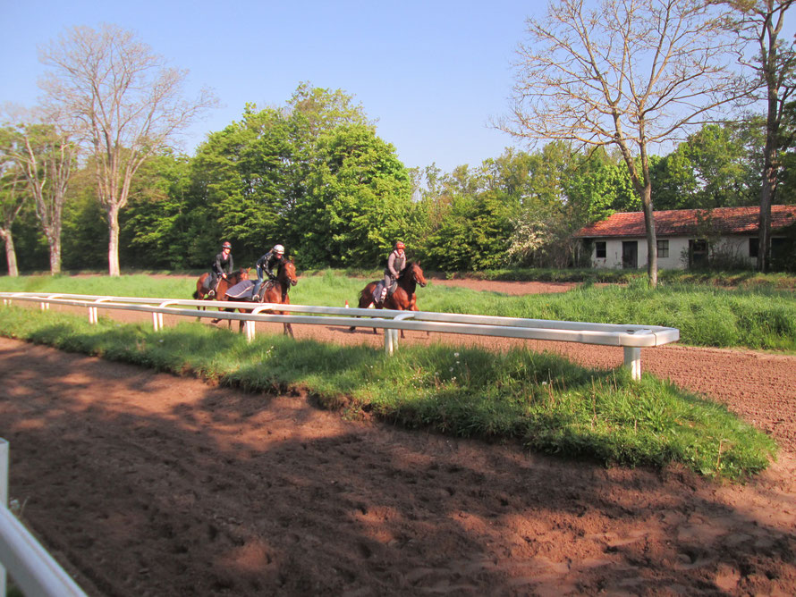 chevaux de course à l'entrainement à Maisons-Laffitte