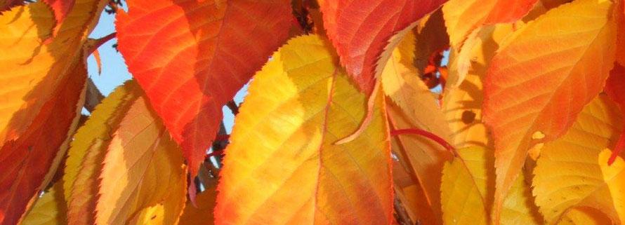 Stauffers Landmetzg - Dekofoto Aktuell im Herbst