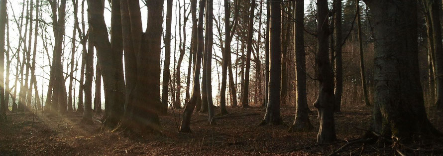 Weihnachten im Wald - Naturabilis