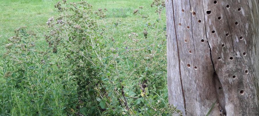 Insektenhotel | naturabilis.de