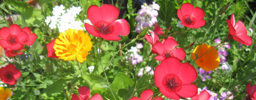 Samenbomben: Blütenpracht selbst gemacht - Naturabilis