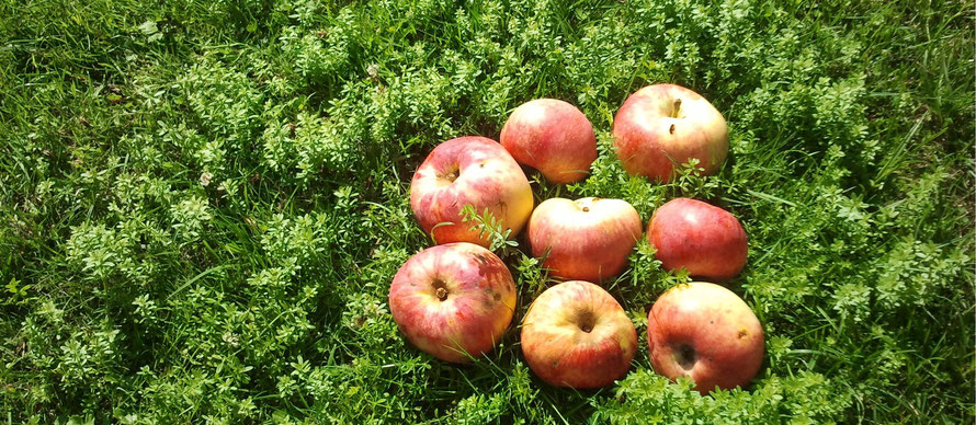 Naturabilis - Äpfel Jakob Fischer