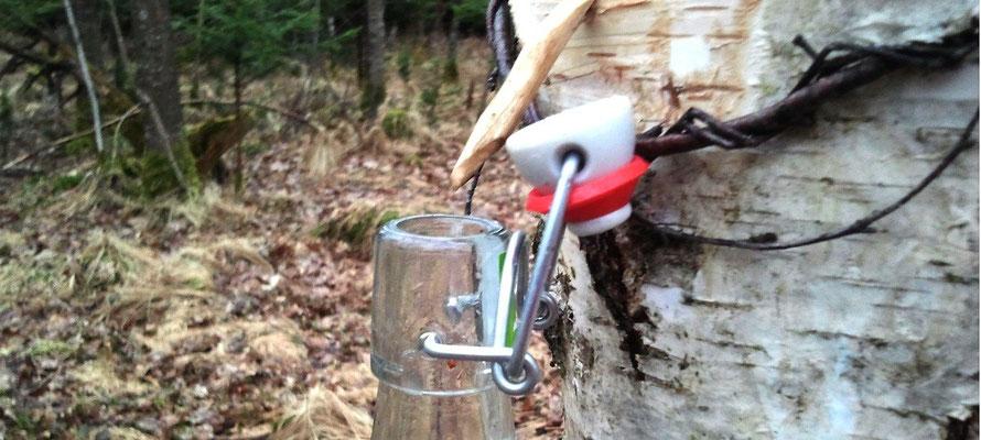 Naturabilis - Birkenwasser selber zapfen