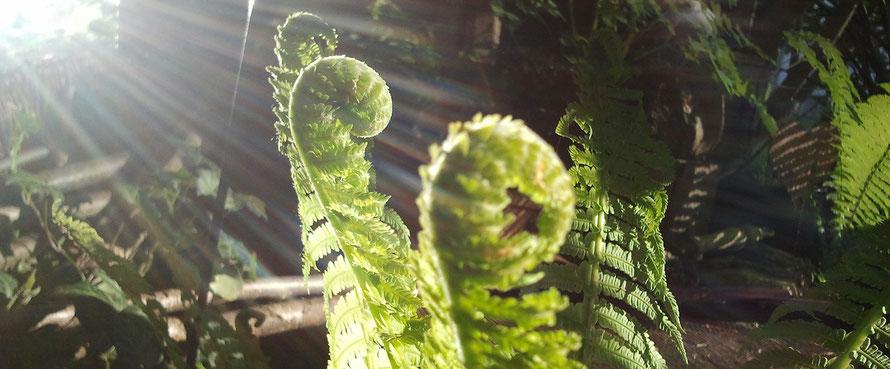 Naturerlebnistag - Naturabilis