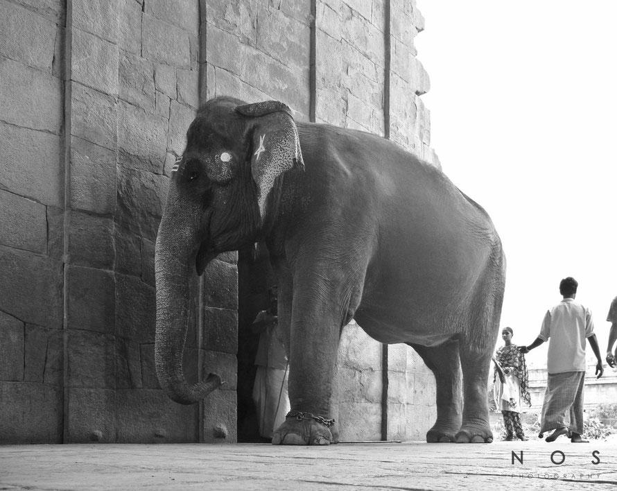 Elefant, Indien