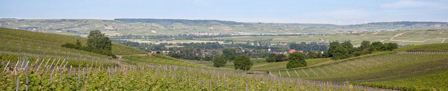 Weinberge mit Bretzenheim im Hintergrund