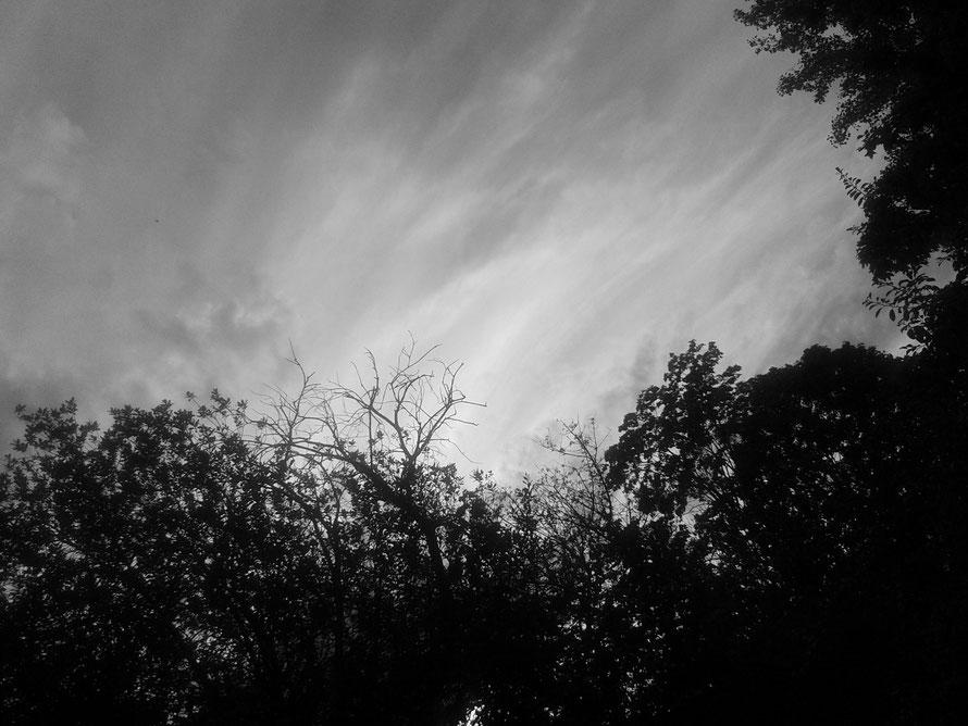 Ihr Blick wanderte nach oben. Die Bäume: filigrane Schattenrisse vor diffusem Licht. Eigentlich schön. Und dann fielen die ersten Regentropfen.
