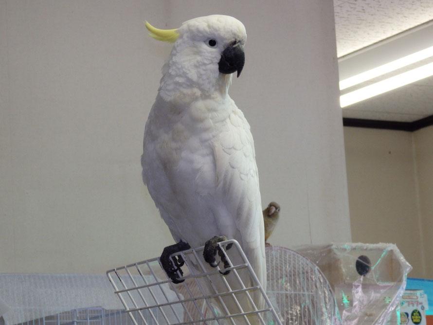 福岡県手乗りインコ小鳥販売店ペットミッキンの木場太郎社長