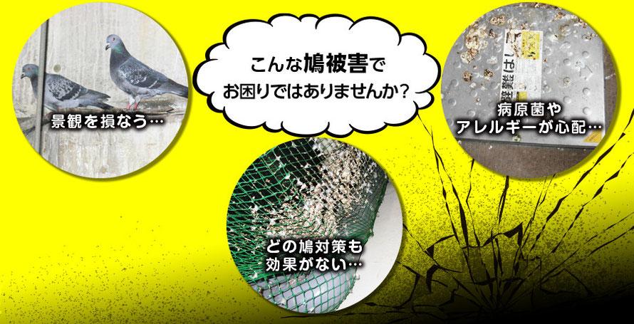 こんな鳩被害でお困りではありませんか?景観を損なう、どのハト対策も効果がない...・病原菌やアレルギーが心配