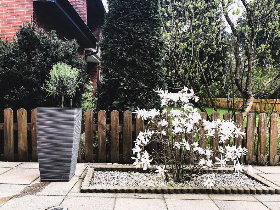 Emsa Casa Cozy Pflanzkübel Produkttest