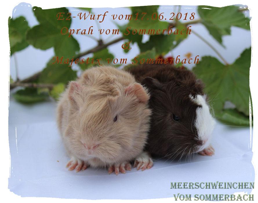 E2-Wurf vom 17.06.2018, Elsa & Esmeralda