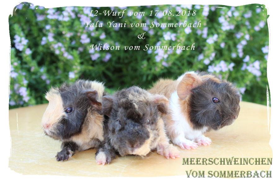 I2-Wurf, 3 Böcke, Inko, Igor und Iggy