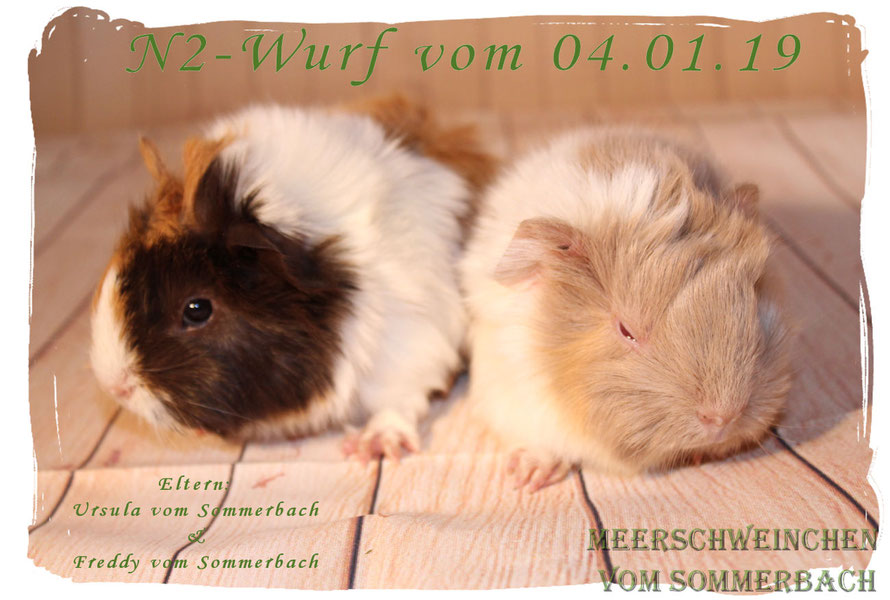 N2-Wurf
