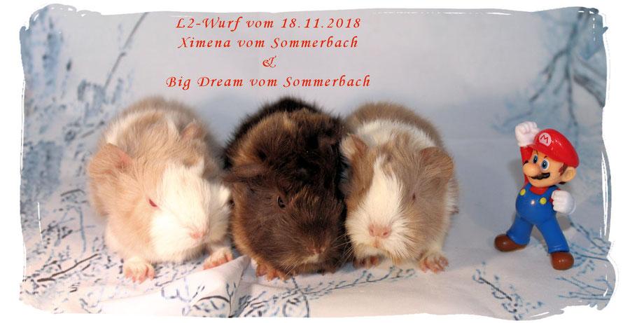 L2-Wurf mit Lion, L.Jackson und Lori