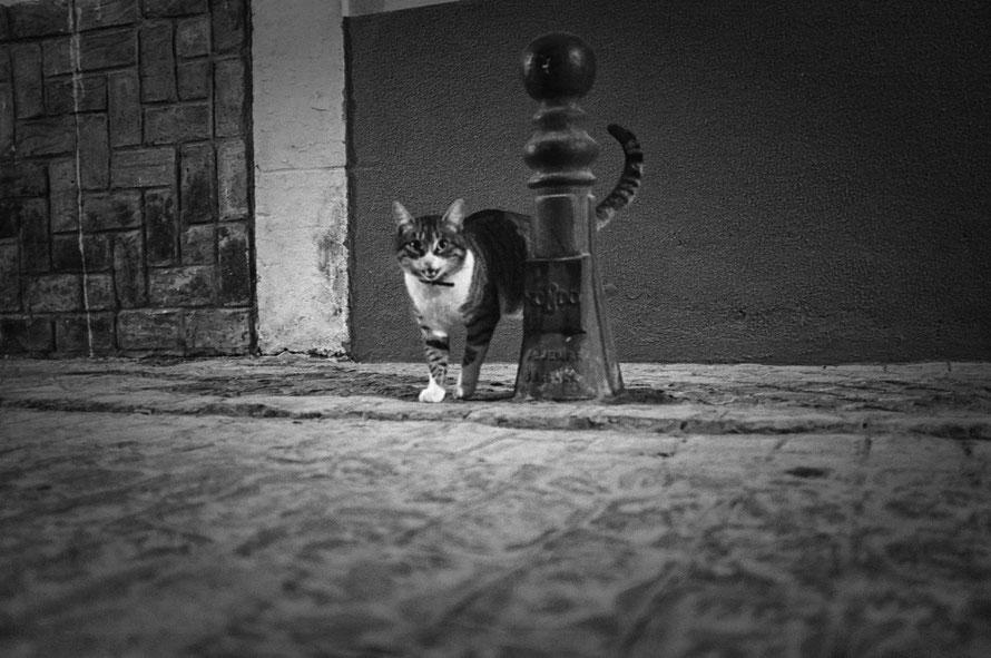 Street Gato