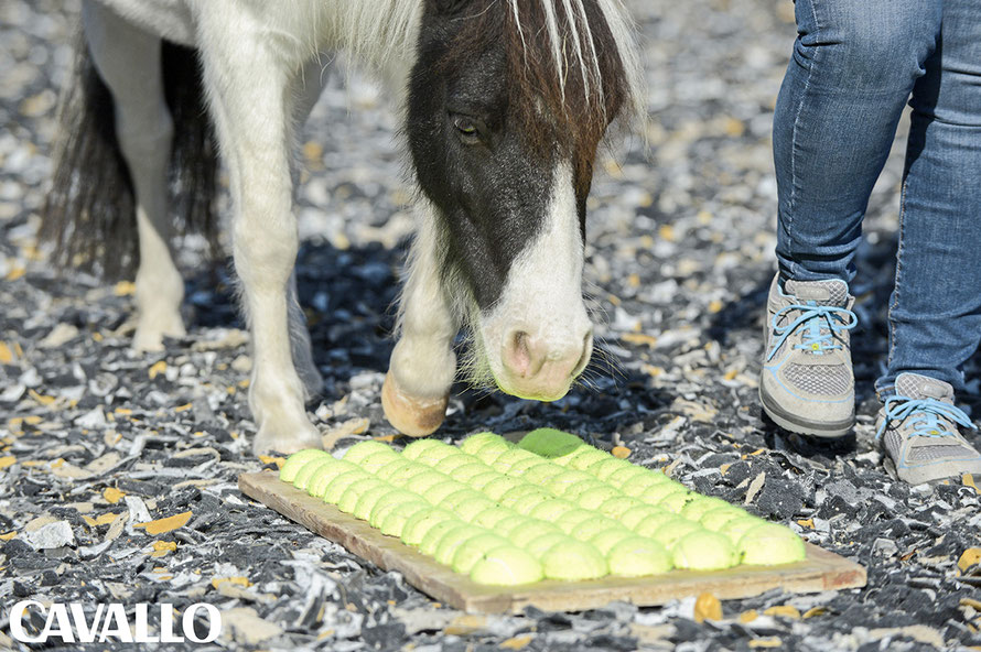 Ergotherapie für Pferde - Mit Tools wie unserem Tennisballbrett fördern wir die Körperwahrnehmung von Pferden