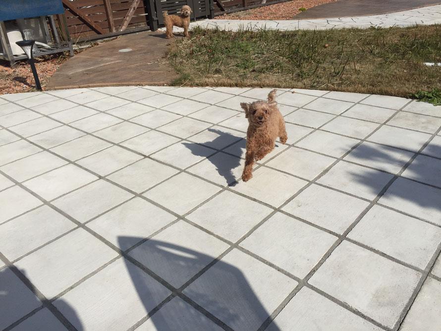 犬 放し飼い ドッグ ガーデン 遊び 走り回る DIY スタンプコンクリート デザインコンクリート 庭