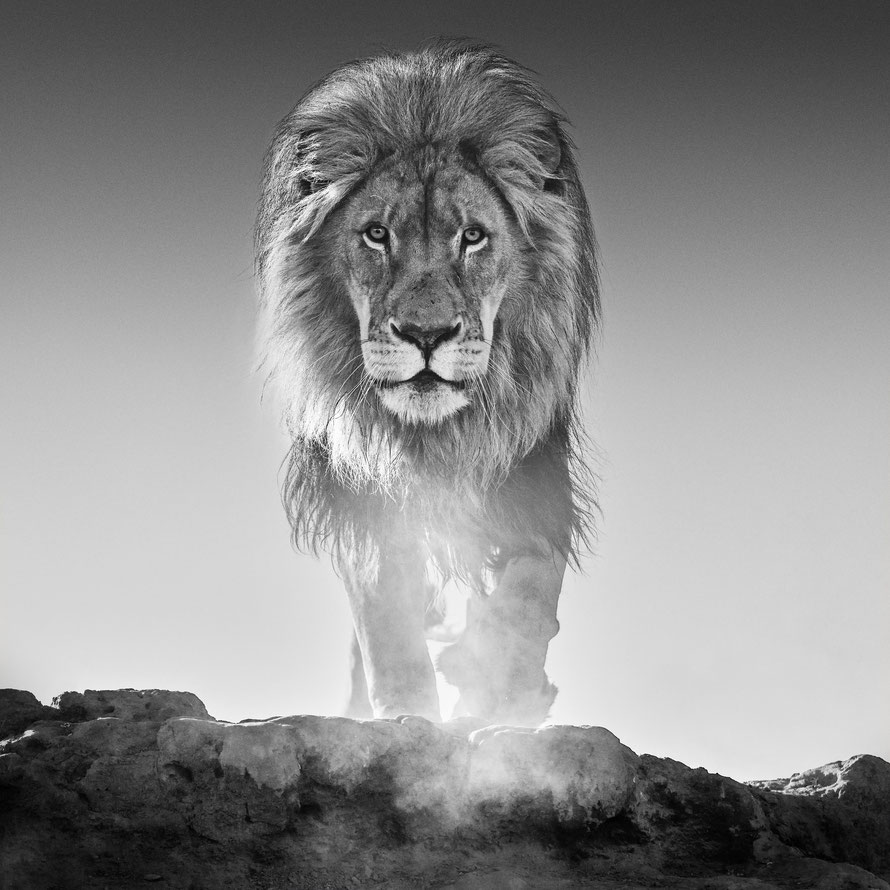 The Old Testament. © David Yarrow von David Yarrow Photography