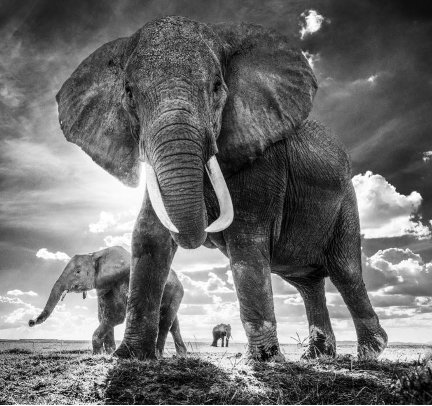 The Untouchables. © David Yarrow von David Yarrow Photography