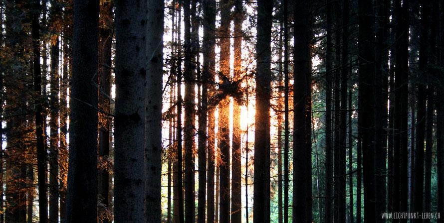 Sonnenaufgang im Wald, Symbolbild für Einzelaufstellungen im Freien von Lichtpunkt Leben