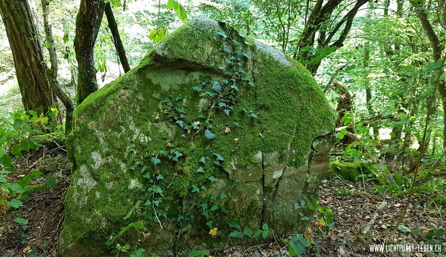 """vermooster Felsbrocken im Wald, Foto zu Blog-Artikel """"Leben vor dem Tod"""" von Lichtpunkt Leben, Systemische Aufstellungen"""