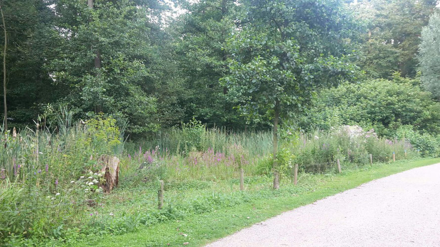 """naturführung zum naturschutzprojekt """"natürlich grün"""" wildblumenwiese in der lanschaftsachse horner geest"""
