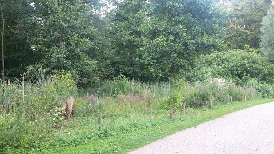 """natur: naturschutzprojekt """"natürlich grün"""" wildblumenwiese in der lanschaftsachse und park horner geest, fahrradtour"""