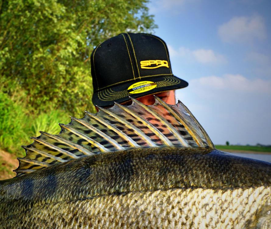 Stephan braucht sich nicht verstecken!! Ausdauer und Ehrgeiz machen einen erfolgreichen Raubfisch-Angler