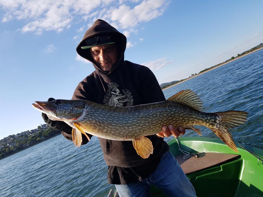 In großen Seen wie dem Sorpesee oder Möhnesee, kann es sich lohnen Mittags/Nachmittags ganz flach zu Schleppen (Lauftiefe 1-2m)