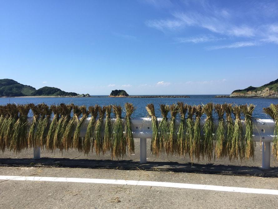 桃取の穏やかな海と干し藁