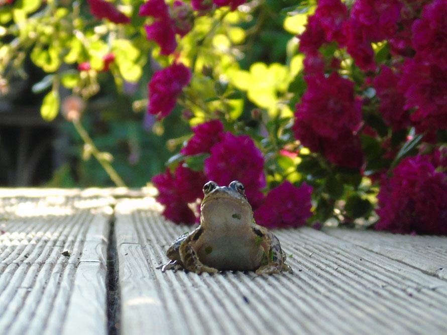 Der Frosch ist wieder da..., Quelle: www.lichtwesenfotografie.com