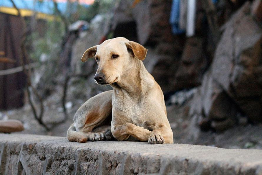 Hunde aus dem Ausland, schwierige Hunde, Problemhunde