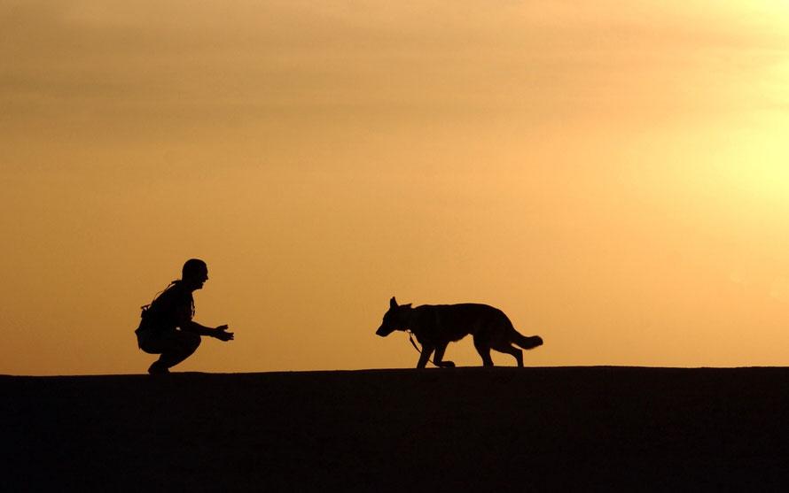 Mensch Hund Kommunikation Schweiz
