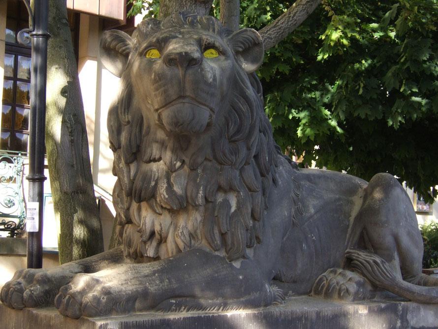 катарина венцль берлинский лев желтоглазый