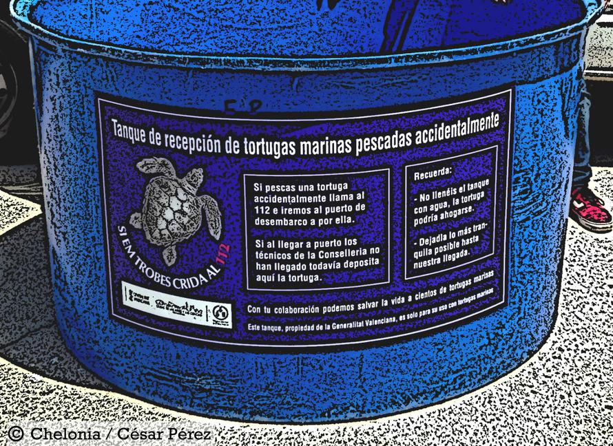 Tanque para tortugas marinas capturadas accidentalmente en el puerto de Calpe