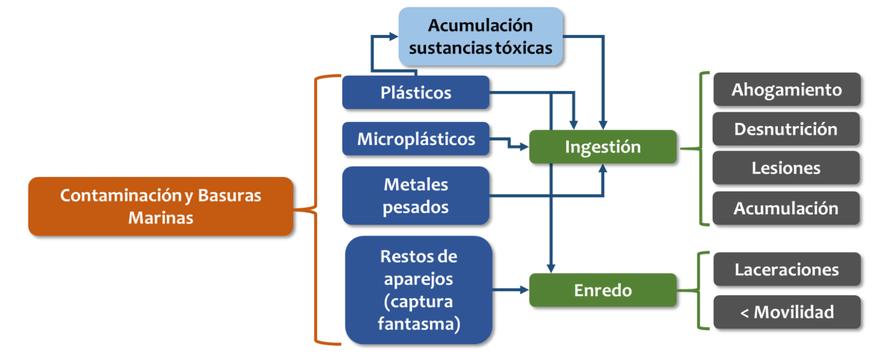 Diagrama de impactos derivados de las basuras marinas sobre las tortugas marinas