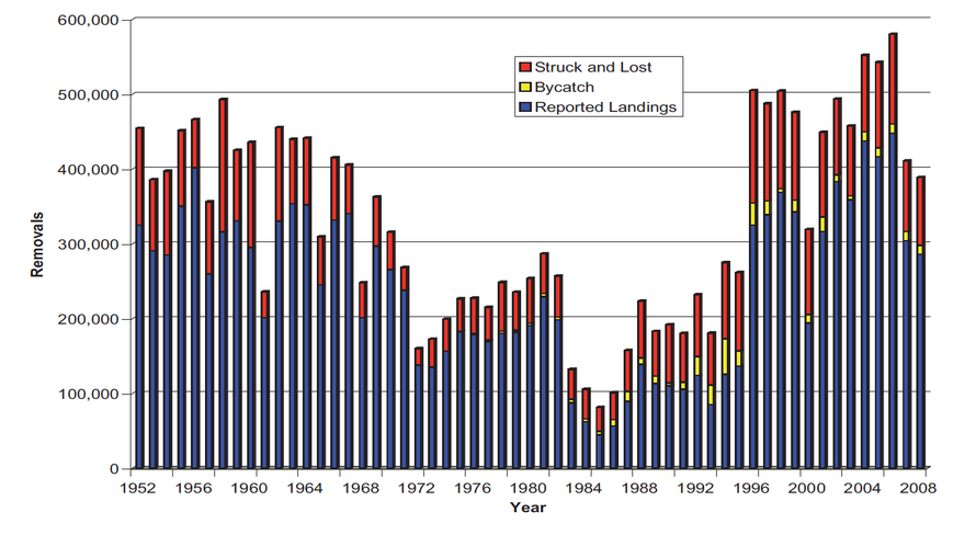 Total removals of Northwest Atlantic harp seals, 1952-2008. (Source: Prospect for Sealing Symposium 2008 below).